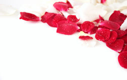 Petals of rose Royalty Free Stock Photography