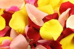 Petals of a rose. Royalty Free Stock Photos