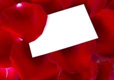 Petals rose Stock Photos
