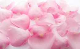Petals rose. Royalty Free Stock Photos