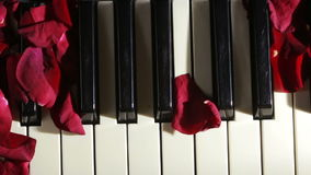 Petals of rose on piano keys. wind blows away the rose petals stock video footage