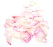 Petals of rose Royalty Free Stock Photo