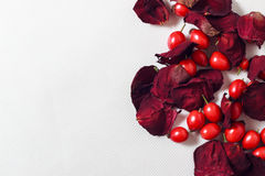 Petals of rose with rose hips Stock Photo