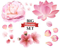Petals and rose, sakura, peony and lotus flowers on white background. Vector editable elements, eps10 floral template stock illustration