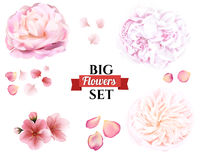 Petals and rose, sakura, peony and lotus flowers on white background. Vector editable elements, eps10 floral template royalty free illustration