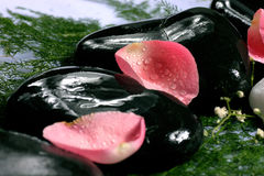 petals rose spa Στοκ Εικόνες