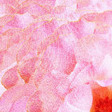 Petals of roses Royalty Free Stock Photography