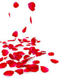 Petals of roses fall on a floor Stock Photos