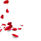 Petals of roses fall on a floor Stock Photography