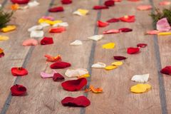 Petals of the roses on the floor Royalty Free Stock Photo