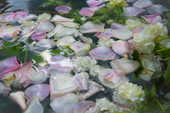 Petals of roses and flowers for background Royalty Free Stock Photos