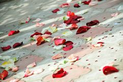Petals of roses scattered on a floor Stock Images