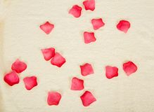 Petals of roses on a terry towel Stock Images