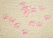 Petals of roses on a terry towel Stock Photography