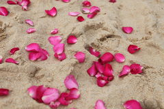 Petals in the sand. Stock Photo