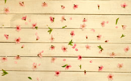 Petals scattered on vintage wood background, top view. Petals scattered on vintage wood background, top view Royalty Free Stock Image