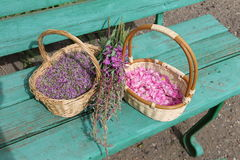 Petals Siberian plant thyme and wild rose in wicker baskets, plant Ivan-tea (tea Koporye) on a green bench. Pink petals Siberian plant thyme and wild rose in Stock Images