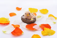 Petals with small nest and bird in it. Royalty Free Stock Photos