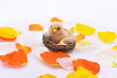 Petals with small nest and bird in it. Stock Photo