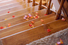 Petals on Stairs Stock Image