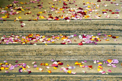 Petals on stairs Royalty Free Stock Image