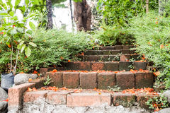 Petals on the stairs in the  garden Royalty Free Stock Image
