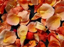 petals steg Arkivfoton