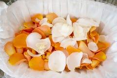 petals steg Arkivbild