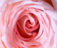 petals steg Fotografering för Bildbyråer