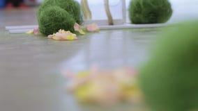 petals steg stock video