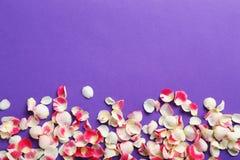 petals steg Arkivbilder