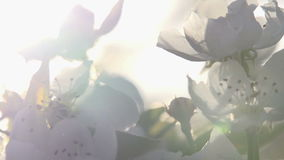 Petals in the Sun stock footage
