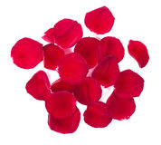 Petals. Top view of red rose petals on white royalty free stock photography