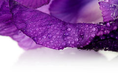 Petals of a violet flower of an iris. Stock Image