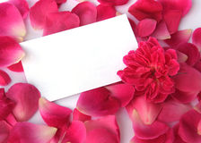 Petals on white Royalty Free Stock Images