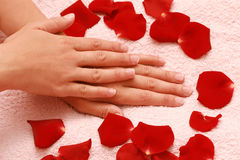 Petals and women's hands Stock Image