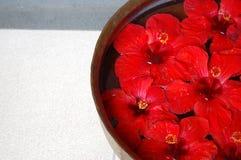 petalsbrunnsort Arkivbild