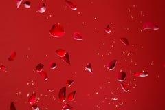 petalsred steg arkivbild