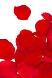 petalsred steg Fotografering för Bildbyråer