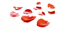 petalsred steg Royaltyfri Foto