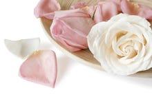 petalsro Fotografering för Bildbyråer