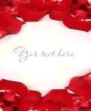 petalstext Royaltyfria Bilder
