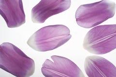 petalstulpan Royaltyfri Bild