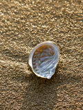 Petar ear, abalone on the sand beach Stock Images