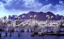 Petchaburee, Thailand taken in Near Infrared. Infrared landscape. Lake and trees  Thailand taken in Near Infrared Royalty Free Stock Photo