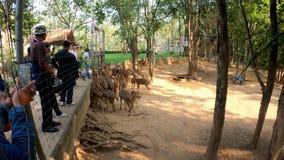 People feed the deer in zoo. stock video footage