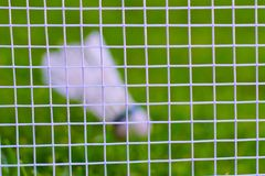 Peteca na grama verde Imagens de Stock