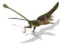 Peteinosaurus pronto para voar ilustração stock
