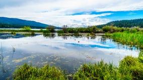 Peter Hope Lake in the Shuswap Highlands in British Columbia, Canada. Ducks on Peter Hope Lake in the Shuswap Highlands along Highway 5A in British Columbia stock image