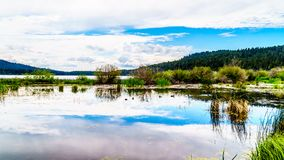 Peter Hope Lake in the Shuswap Highlands in British Columbia, Canada. Ducks on Peter Hope Lake in the Shuswap Highlands along Highway 5A in British Columbia stock photo